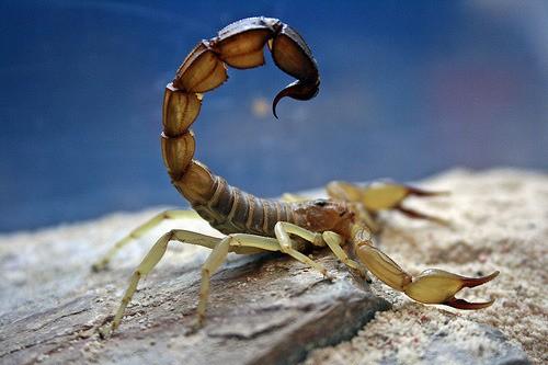 Le scorpion la leçon de vie