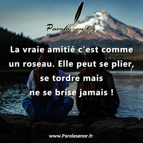 La vraie amitié c'est comme un roseau. Elle peut se plier, se tordre mais ne se brise jamais