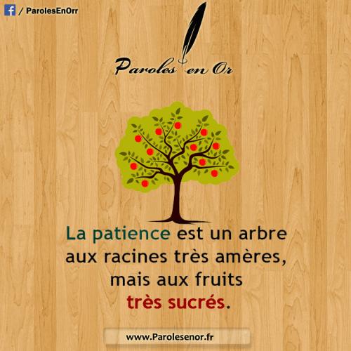 La patience est un arbre dont la racine est amère, et dont les fruits sont très doux